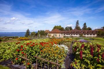 Stauden-und Sonnenblumenbeete zeigen klassische Bauerngartenpflanzen