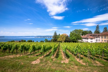 Weinanbau auf dem Arenenberg seit dem frühen 15. Jahrhundert