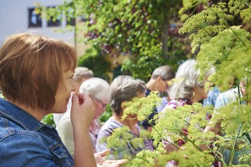 Die duftenden Pflanzen im Kräutergarten Bibelgalerie Meersburg