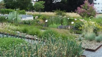 Bibelgarten Gossau