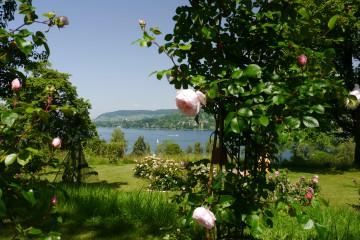 Garten Kohler im schweizerischen Mammern