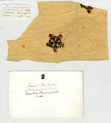 Die Originaltapete aus dem Sterbezimmer auf St. Helena