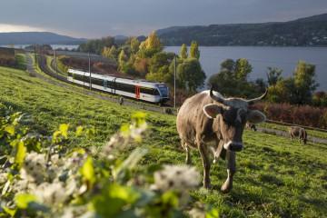 Mit der Bahn am Bodensee entlang