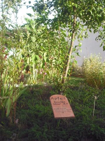 Bibelgarten vom Waltraud Möhrke