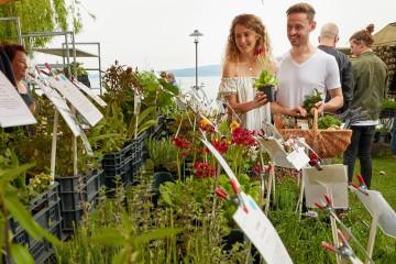Hildegard von Bingen beim Radolfzeller Kräutermarkt