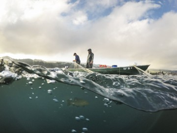 Wildfang am Untersee
