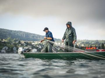 Fischwochen am westlichen Bodensee