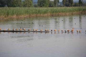 Die Region ist ein Eldorado seltener Vogelarten