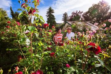 Privater Rosengarten der Familie Auer in Gaienhofen