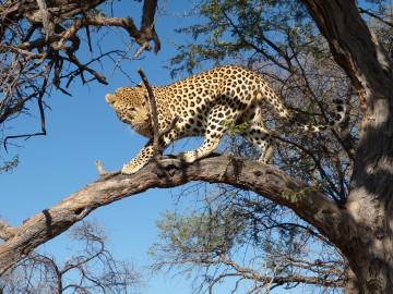 Mit Inselhüpfen zu den wilden Tieren Afrikas