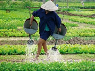 Die Reiskammer Vietnams